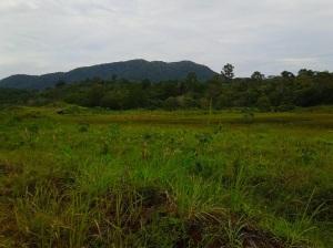 Gunung Lanjut