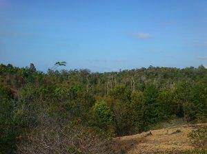 penampakan sebagian hutan pulau Mapur