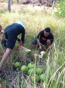 Hasil petikan buah kelapa